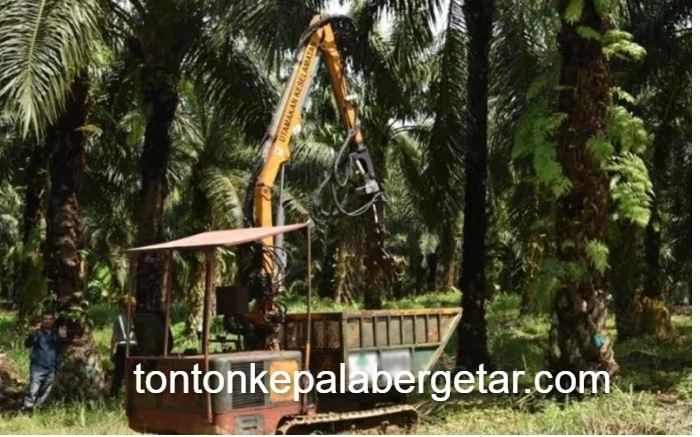 Sarawak falls brief on oil palm regardless of having largest plantation space