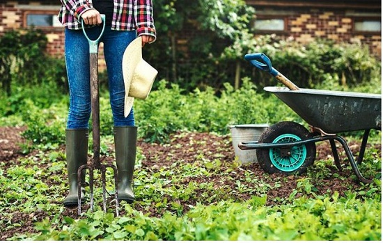 The psychological well being advantages of rising your individual allotment